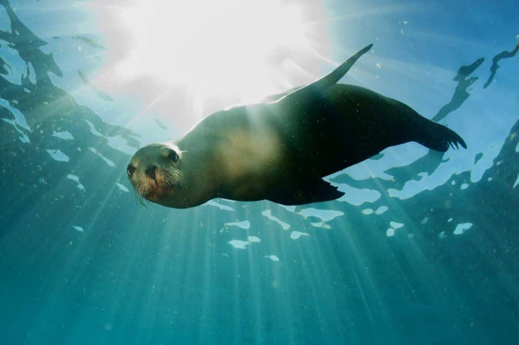 Sea Lions Are in Danger // And That Means We Are Too